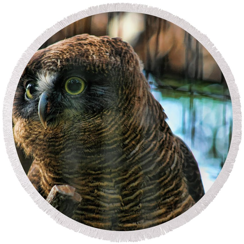 Rufous Owl Round Beach Towel featuring the photograph Unlawful Detention by Douglas Barnard