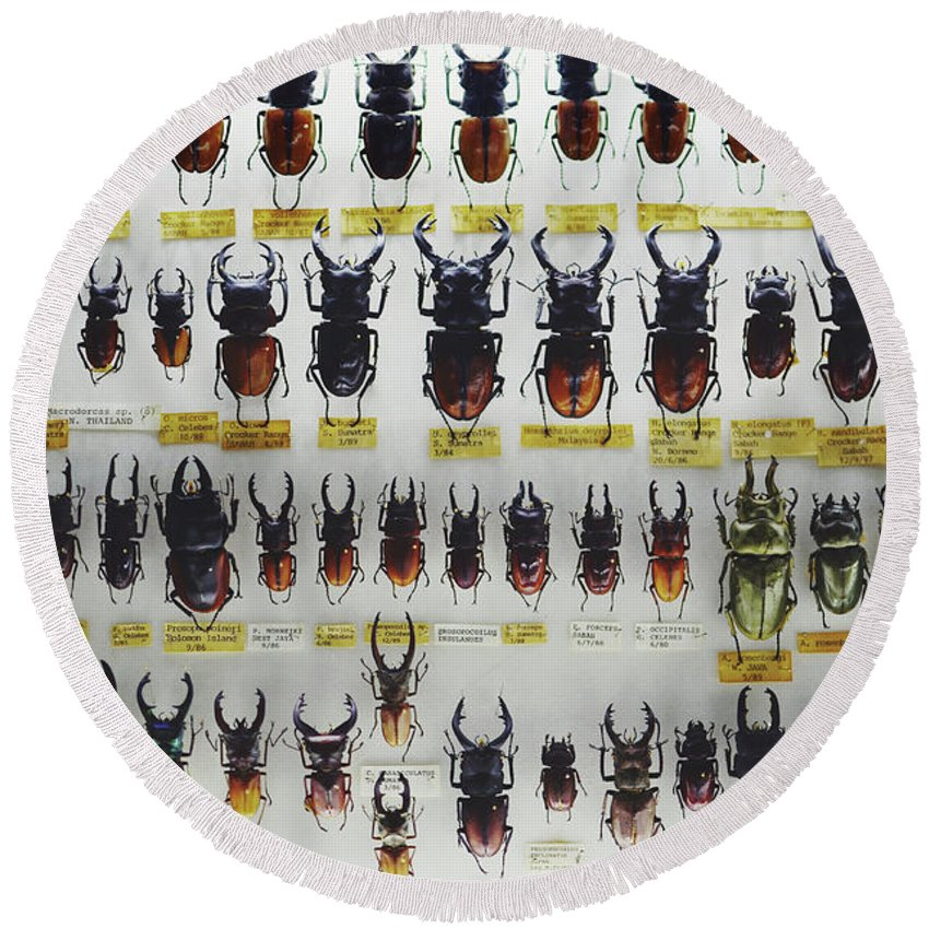 Alike Round Beach Towel featuring the photograph Unusual Pattern Made Out Of Many Stag Beetles Of Different Sizes by Srdjan Kirtic
