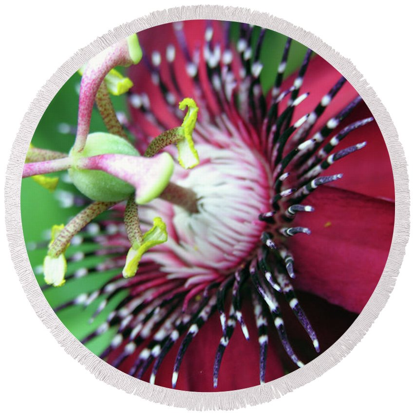 Nature Round Beach Towel featuring the photograph Up Close 2 by Adam Vance