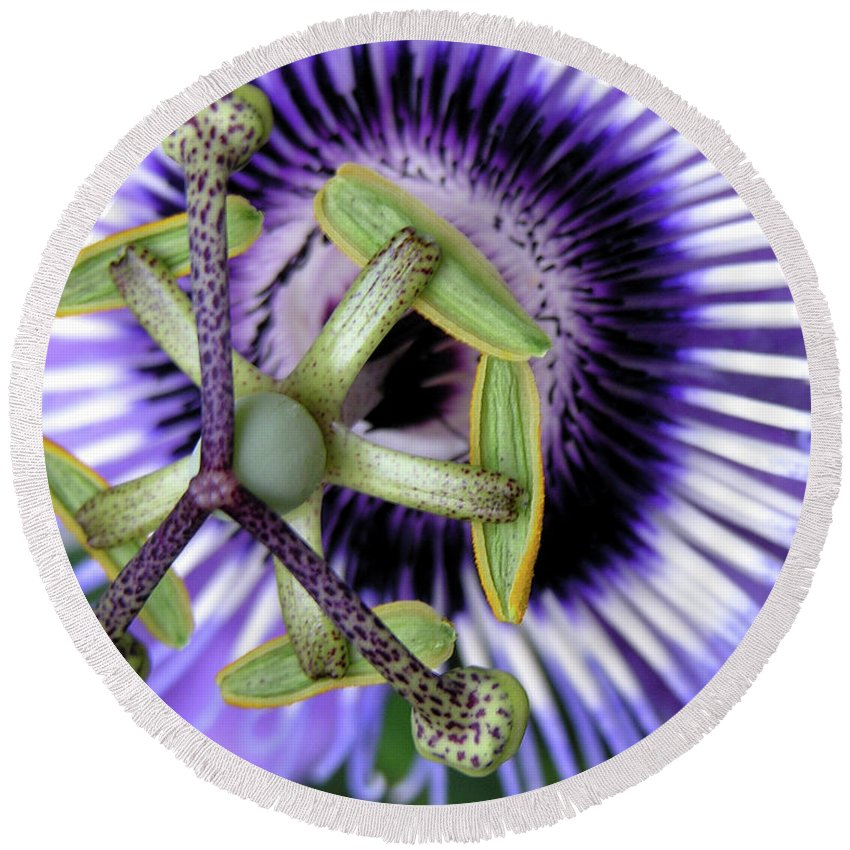 Nature Round Beach Towel featuring the photograph Up Close 3 by Adam Vance