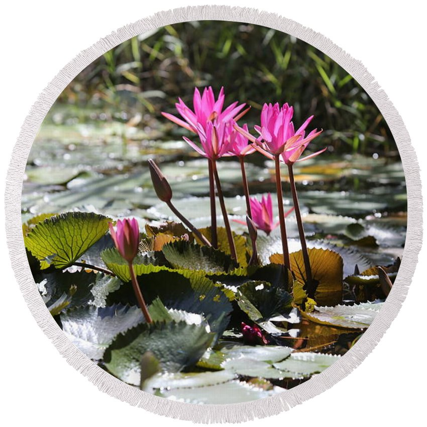 Vietnam Round Beach Towel featuring the photograph Up Close Water Lilies by Chuck Kuhn