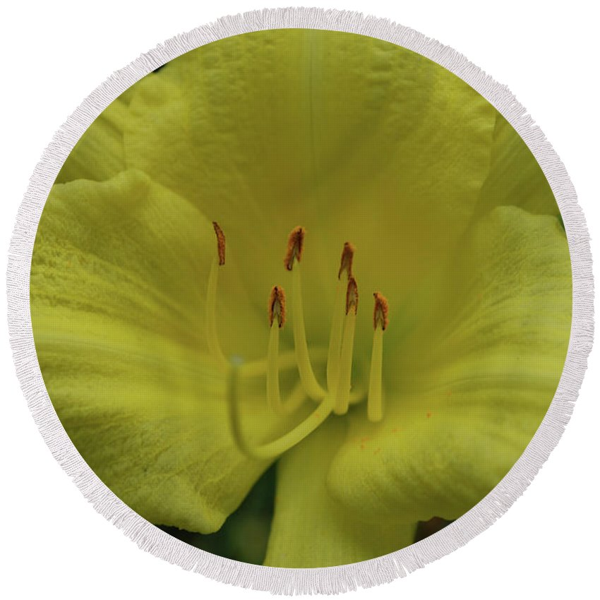 Lily Round Beach Towel featuring the photograph Up-close With A Very Bright Yellow Daylily Flower by DejaVu Designs