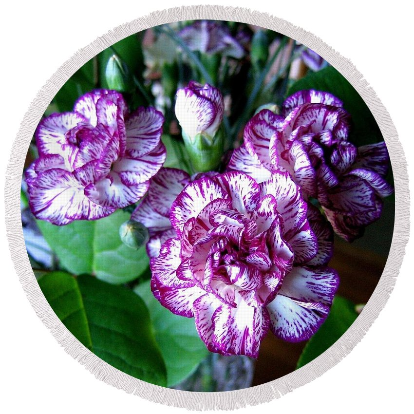 Carnations Round Beach Towel featuring the photograph Variegated Carnations by Will Borden