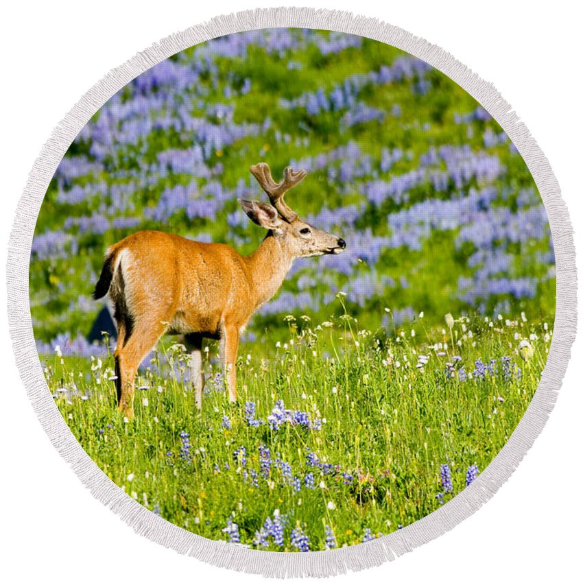 Deer Round Beach Towel featuring the photograph Velvet On Lupine by Mike Dawson