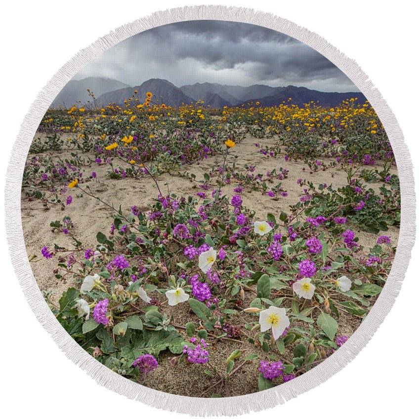 Anza-borrego Desert Round Beach Towel featuring the photograph Verbena And Primrose by Peter Tellone