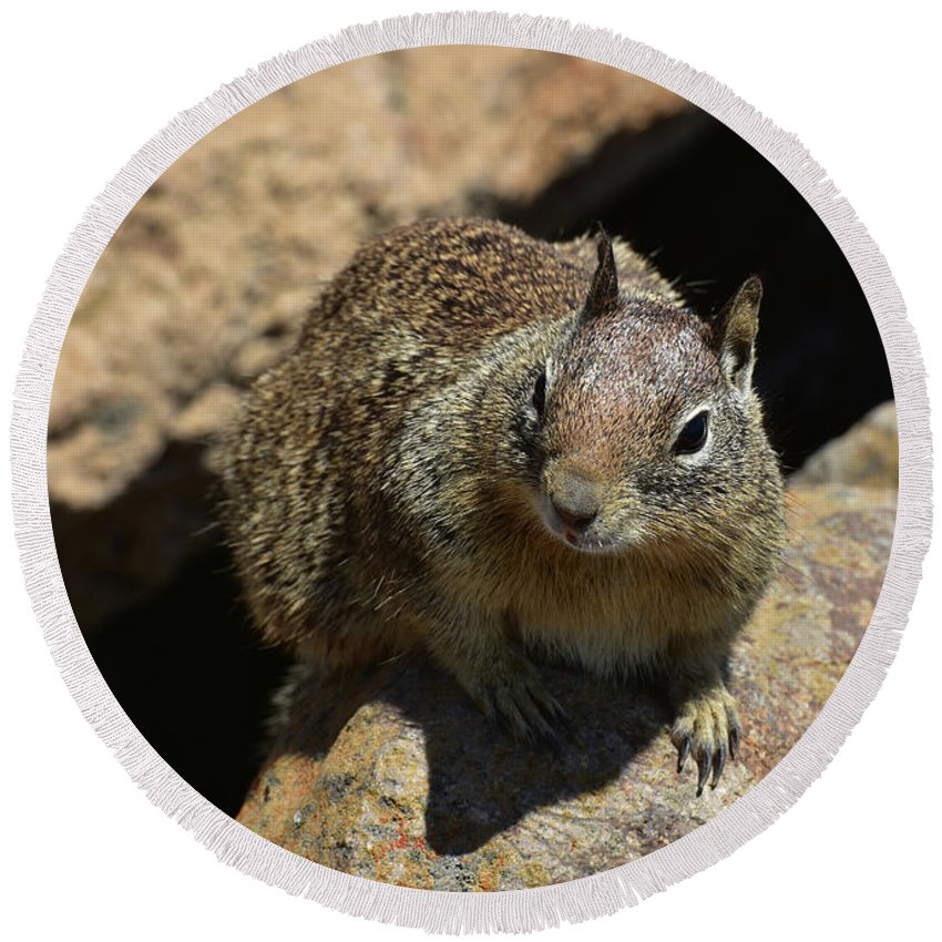 Squirrel Round Beach Towel featuring the photograph Very Cute Face Of A Wild Squirrel In California by DejaVu Designs