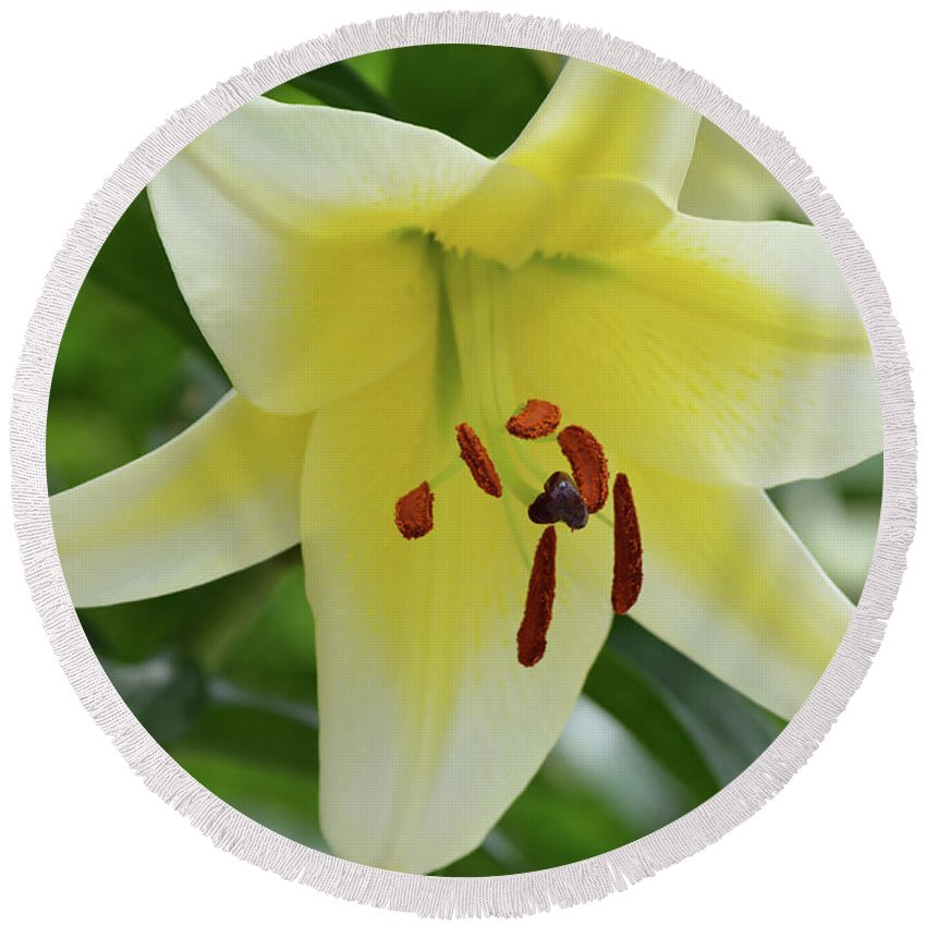 Lily Round Beach Towel featuring the photograph Very Pretty Single Blooming Yellow Daylily Flower by DejaVu Designs