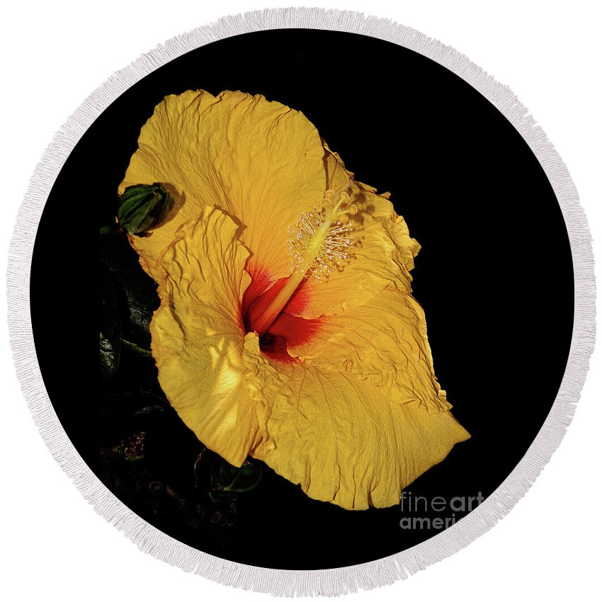 Photography Round Beach Towel featuring the photograph Vibrant Yellow Hibiscus By Kaye Menner by Kaye Menner