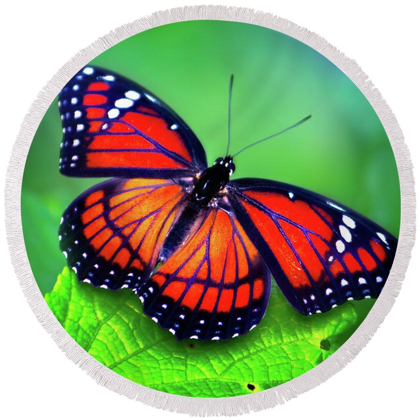 Monarch Butterfly Round Beach Towel featuring the photograph Viceroy Perch by Mark Andrew Thomas