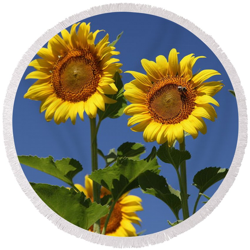 Sunflower Round Beach Towel featuring the photograph Viewing The Past by Amanda Barcon