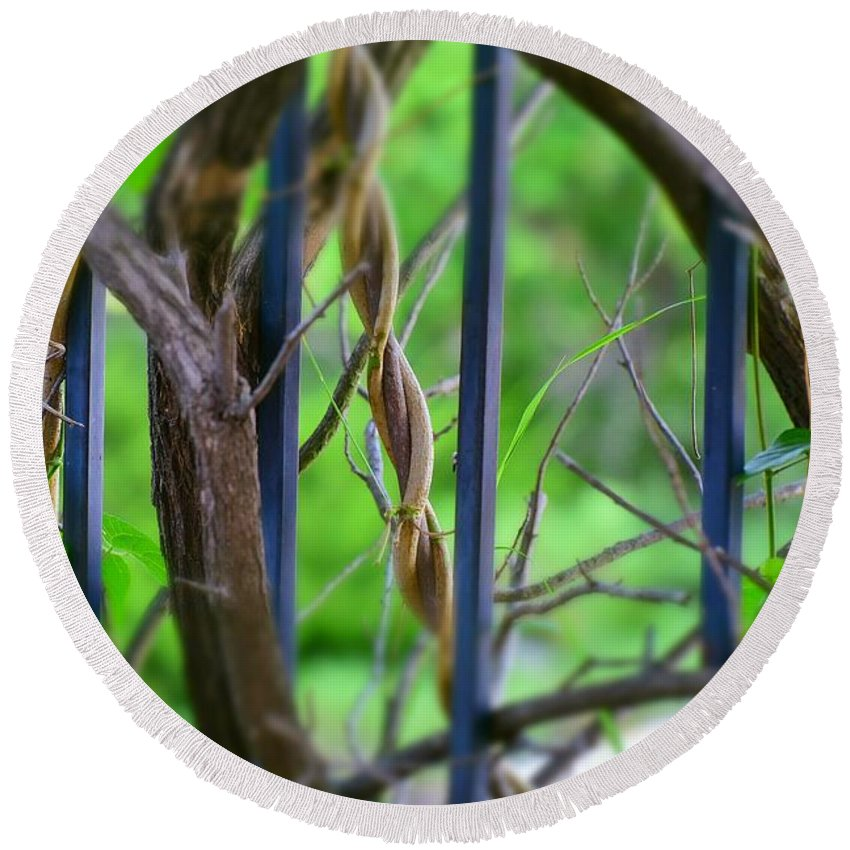 Linda Brody Round Beach Towel featuring the photograph Vines II by Linda Brody