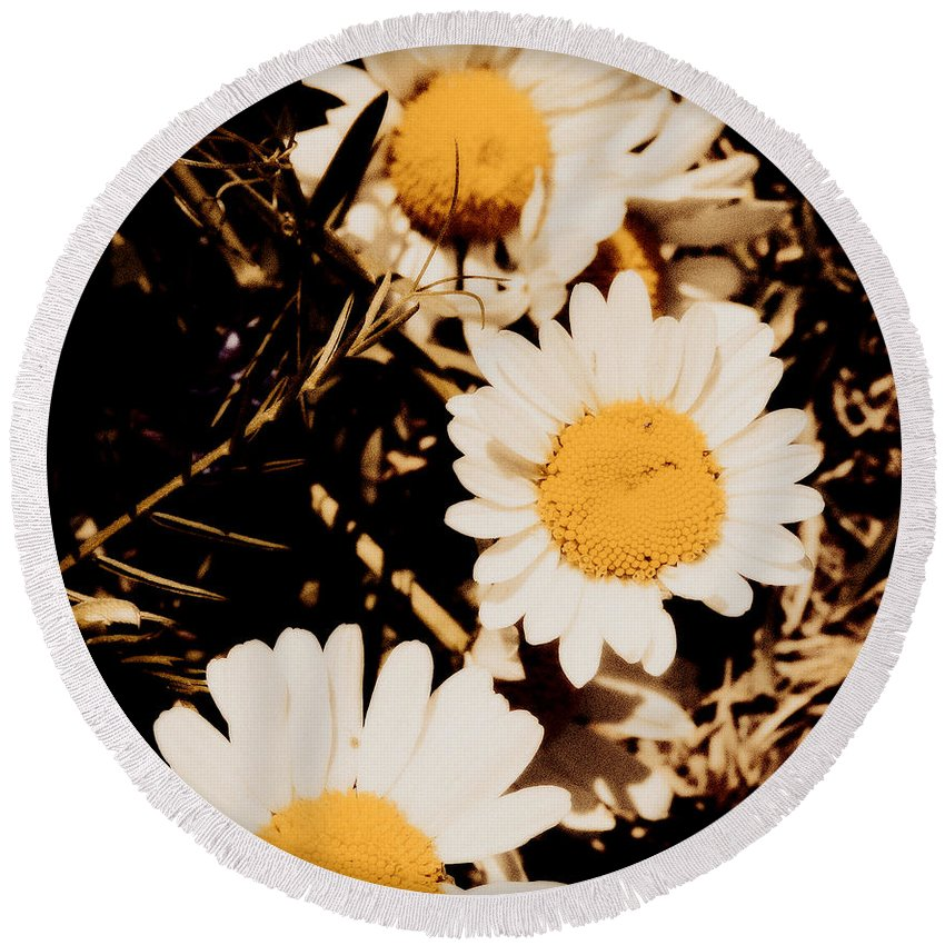 Daisies Round Beach Towel featuring the photograph Vintage Daisies by Heidi J Becker