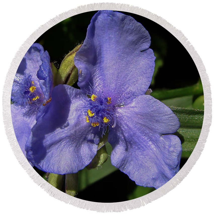 Violet Round Beach Towel featuring the photograph Violet Blooms by Carl Moore