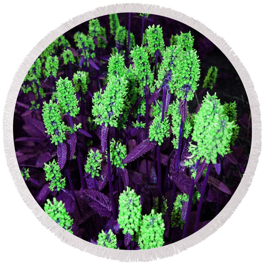 Round Beach Towel featuring the photograph Violet Dream On Green by Jamie Lynn