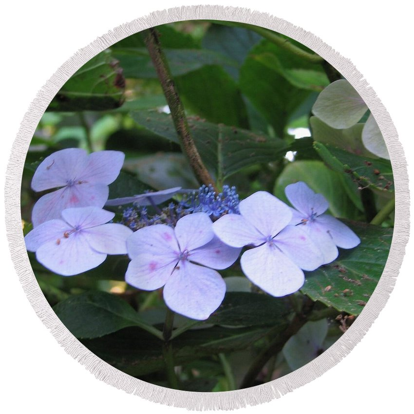 Violets Round Beach Towel featuring the photograph Violets O The Green by Kelly Mezzapelle