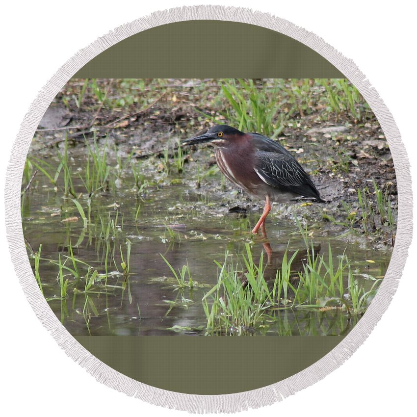 Birds Round Beach Towel featuring the photograph Wading Green Heron by Wayne Williams