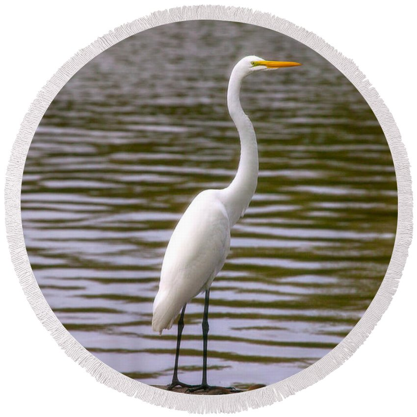 Egret Round Beach Towel featuring the photograph Wait And Rest by Mykel Davis