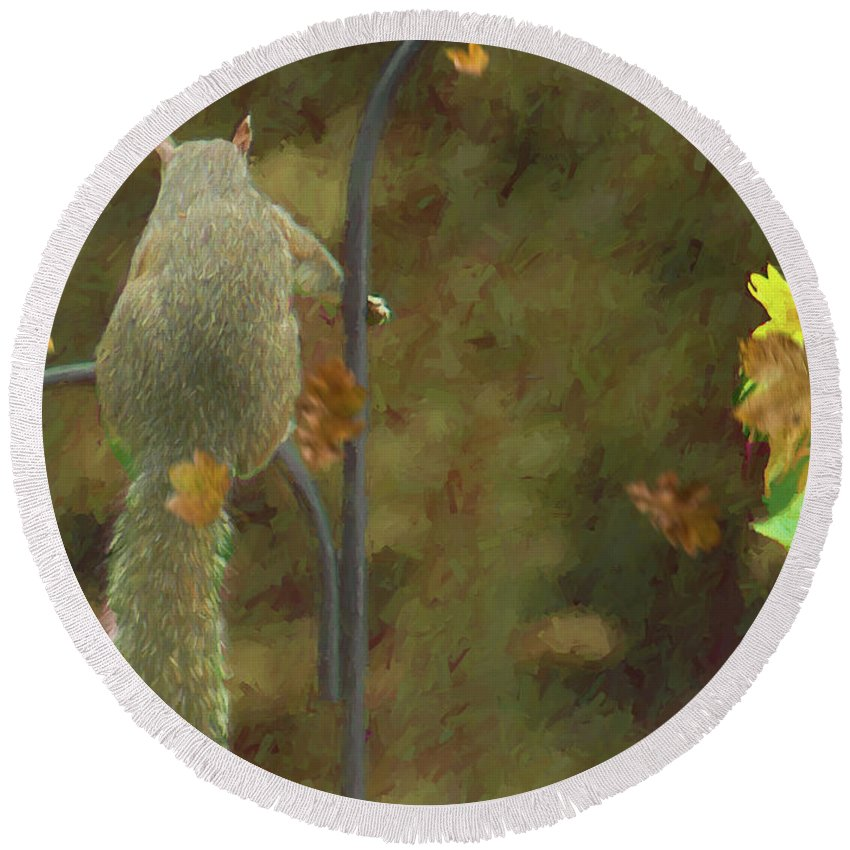 Squirrel Round Beach Towel featuring the photograph Waiting For Friends by Ericamaxine Price