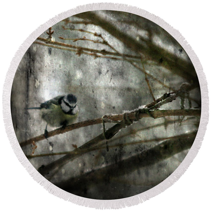 Blue Tit Round Beach Towel featuring the photograph Waiting For Springtime by Angel Tarantella