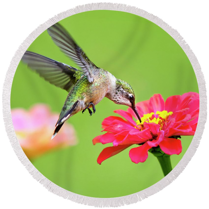 Hummingbird Round Beach Towel featuring the photograph Waiting In The Wings Hummingbird Square by Christina Rollo