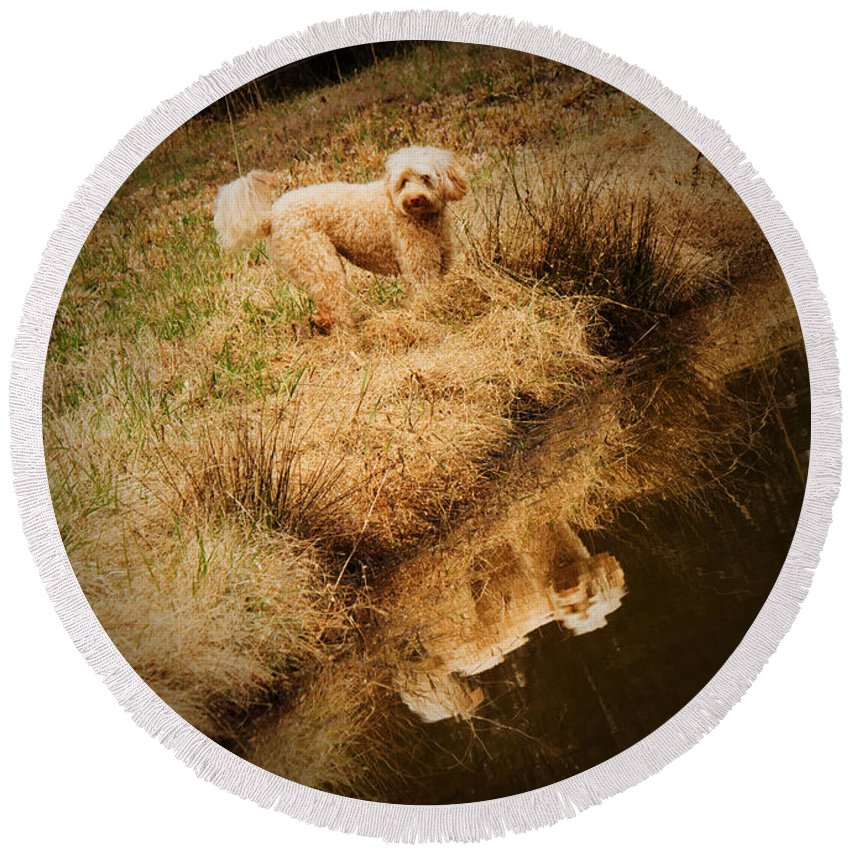 Multi-generational Labradoodle Round Beach Towel featuring the photograph Walking By The Pond by Sandra Clark
