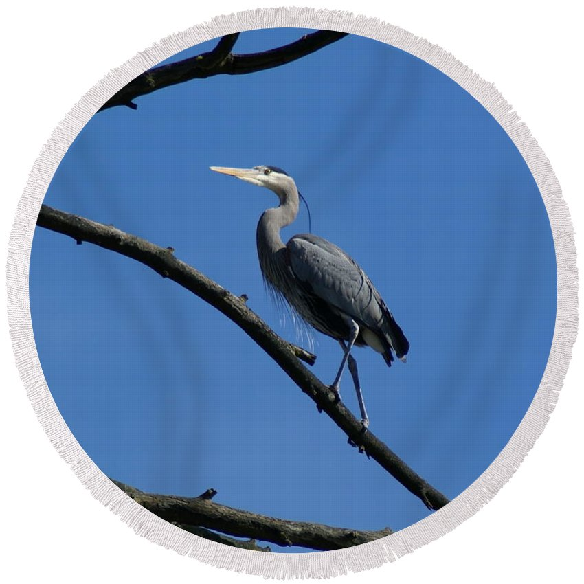 Birds Round Beach Towel featuring the photograph Walking The High Branch by Ben Upham III