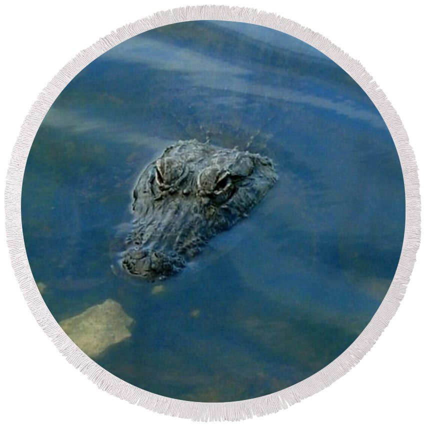 Alligator Round Beach Towel featuring the photograph Wally The Gator by Robert Nickologianis