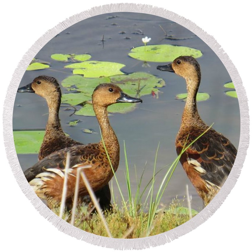 Wandering Round Beach Towel featuring the photograph Wandering Whistling Ducks by Evie Hanlon
