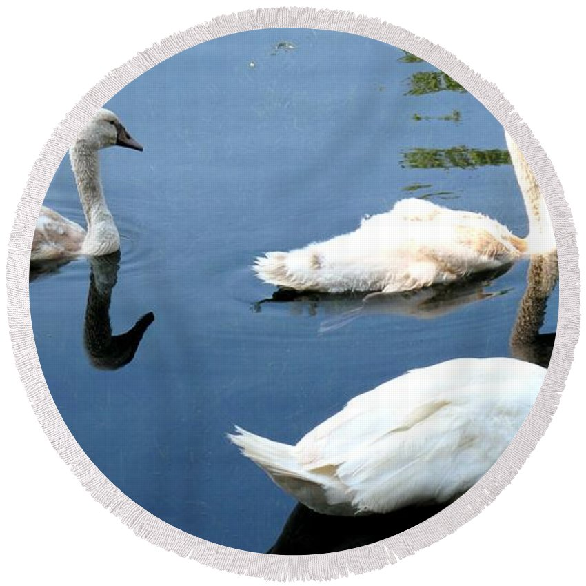 Swans Round Beach Towel featuring the photograph Ward by Ian MacDonald