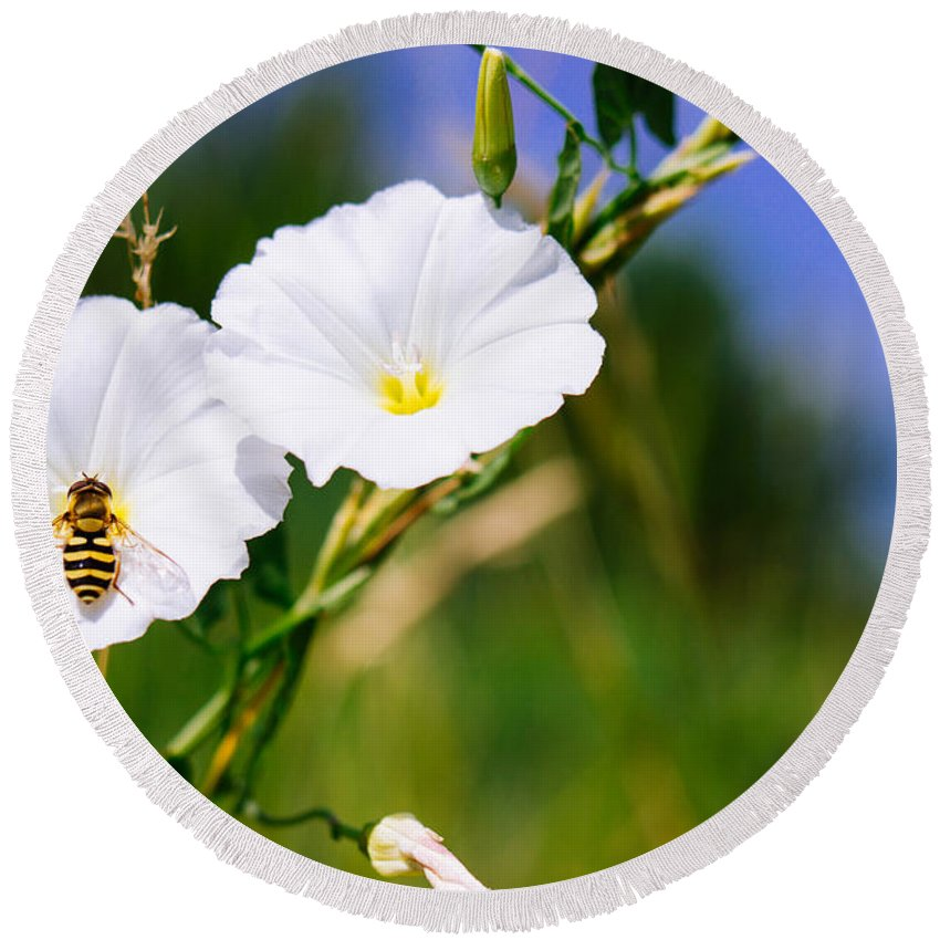 Wasp Round Beach Towel featuring the photograph Wasp On A White Flower by Pati Photography