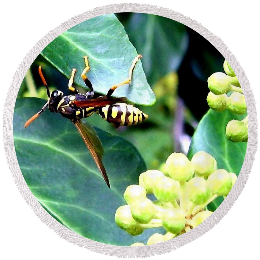 Wasp Round Beach Towel featuring the photograph Wasp On The Ivy by Will Borden