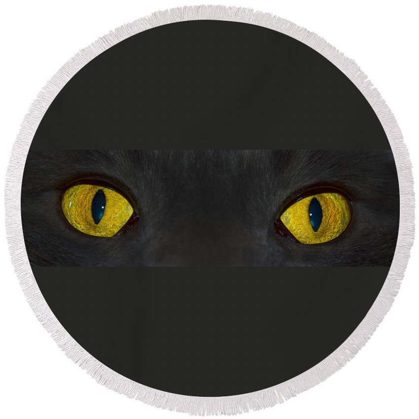 Cat Eyes Round Beach Towel featuring the photograph Watching You by Shane Bechler