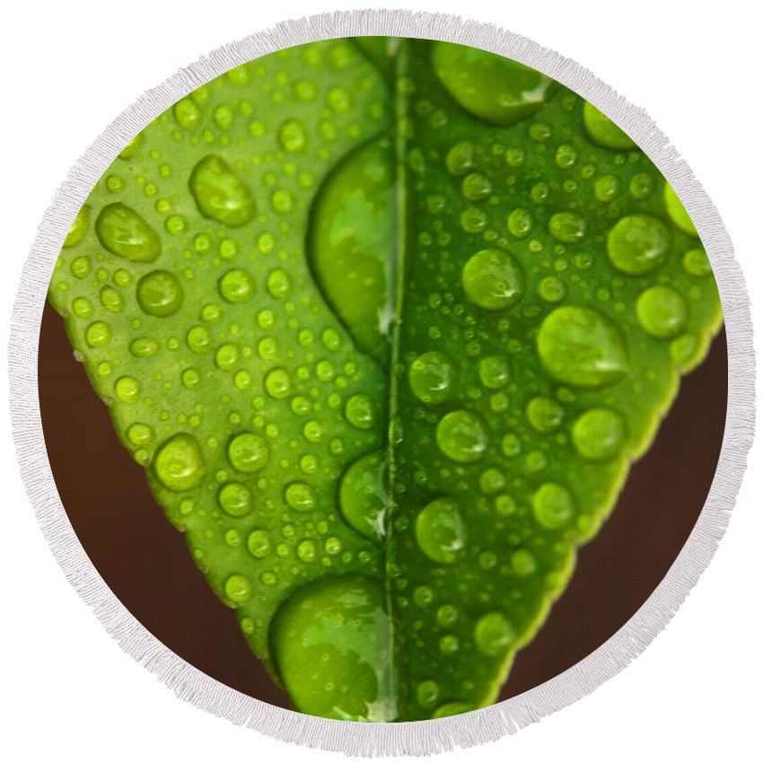 Leaf Round Beach Towel featuring the photograph Water Droplets On Lemon Leaf by Ralph A Ledergerber-Photography