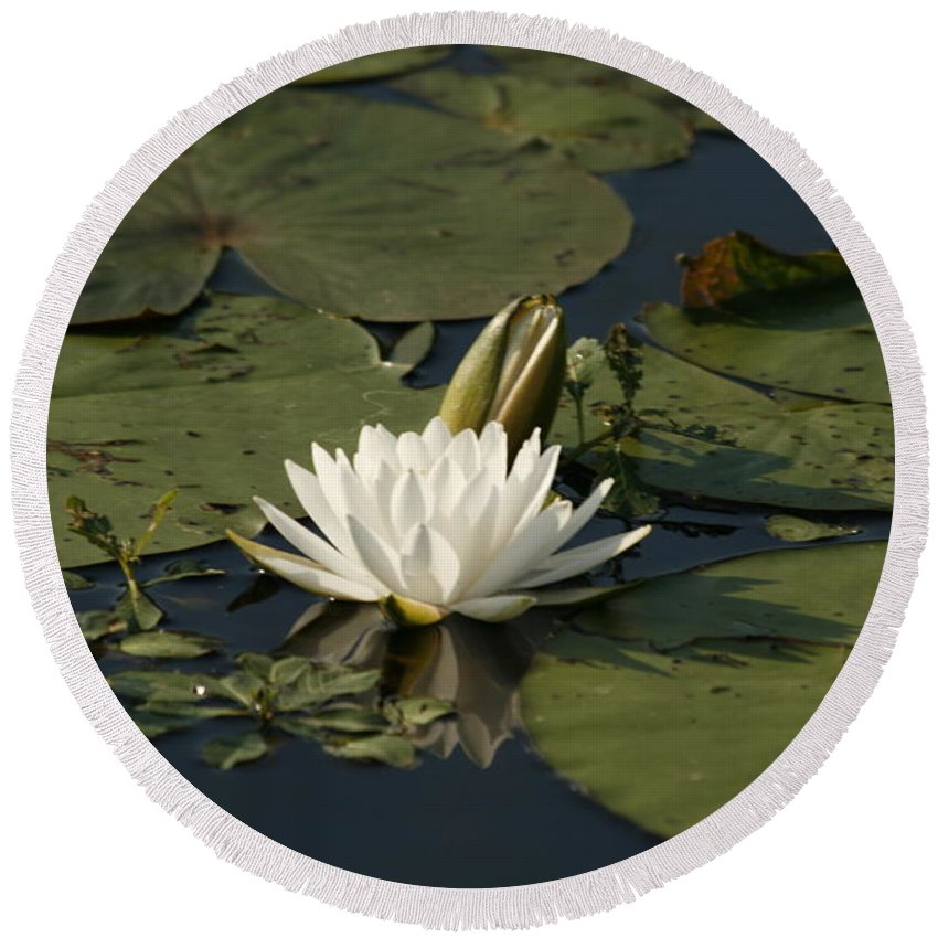 Water Round Beach Towel featuring the photograph Water Lilies And Pads by Shirley Sykes Bracken