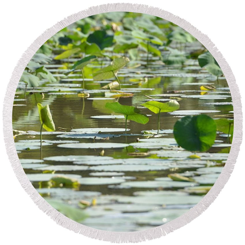 Sullivan Island Round Beach Towel featuring the photograph Water Lilies by Tammy Mutka