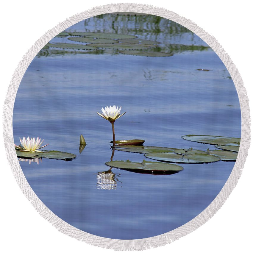 Botswana Round Beach Towel featuring the photograph Water Lilies by Tony Murtagh
