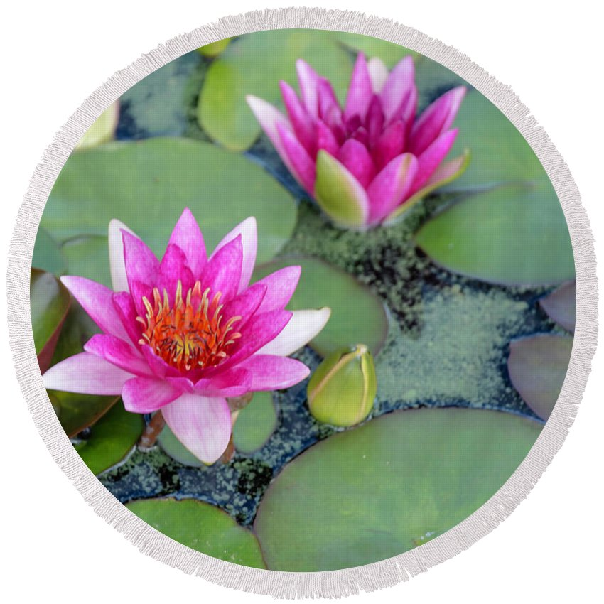 Water Lily Round Beach Towel featuring the photograph Water Lily #2 by Chris Coffee
