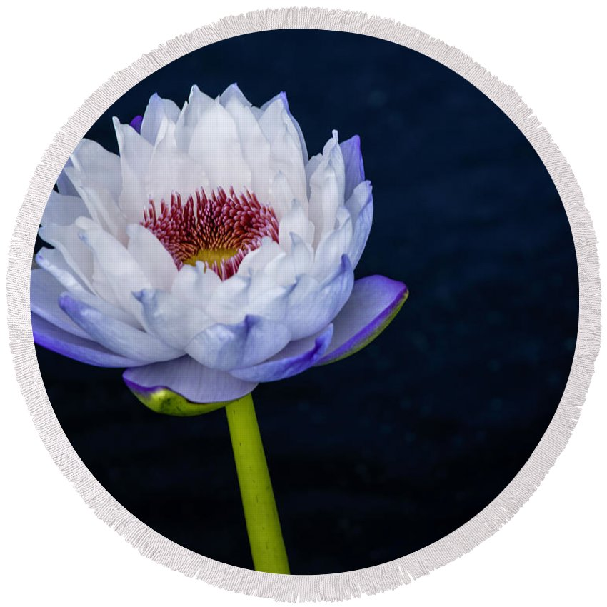 Water Lily Round Beach Towel featuring the photograph Water Lily #3 by Chris Coffee
