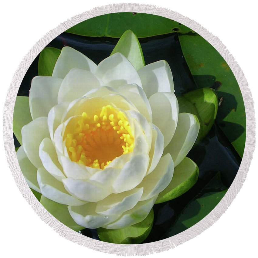 Cassadaga Lakes Round Beach Towel featuring the photograph Water Lily 3437 by Guy Whiteley