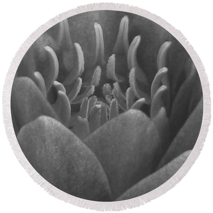Water Lily Round Beach Towel featuring the photograph Water Lily Flame Bw by Pamela Critchlow