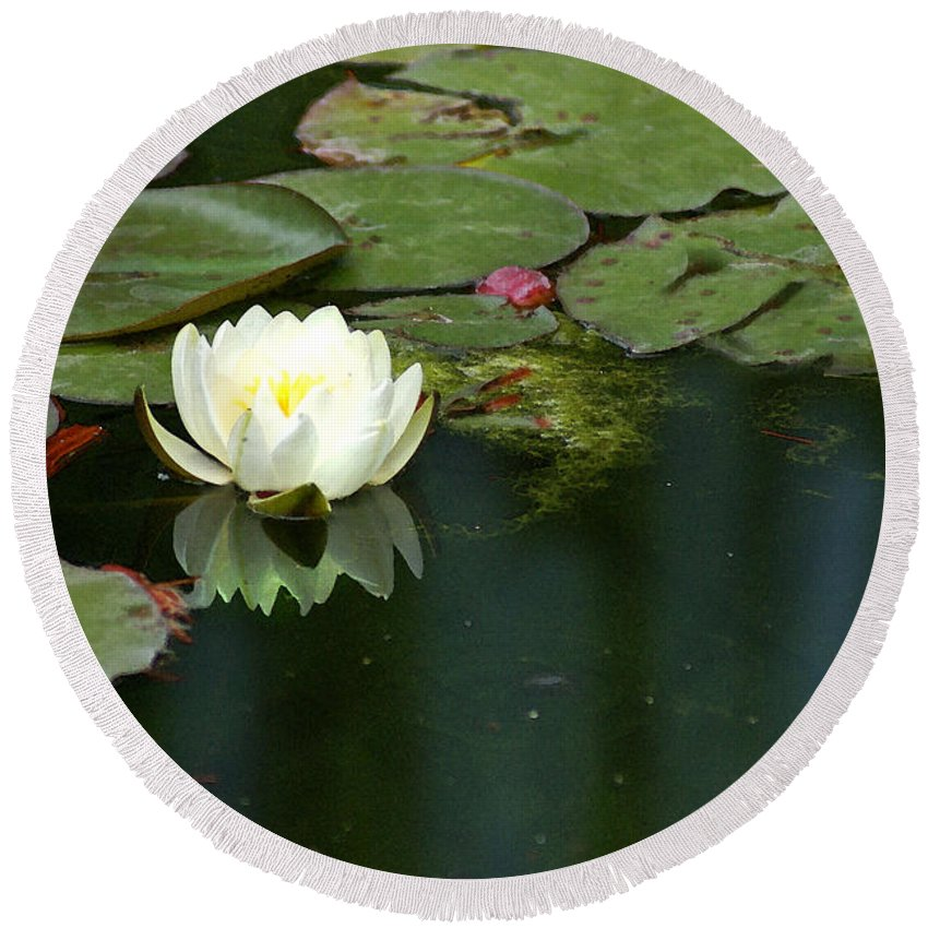 Lily Round Beach Towel featuring the photograph Water Lily by Heather Coen