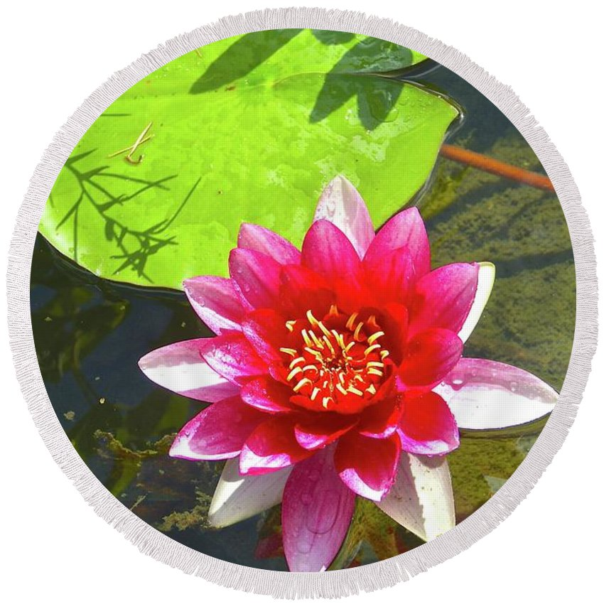 Round Beach Towel featuring the photograph Water Lily In Pond by Sherri Chritton