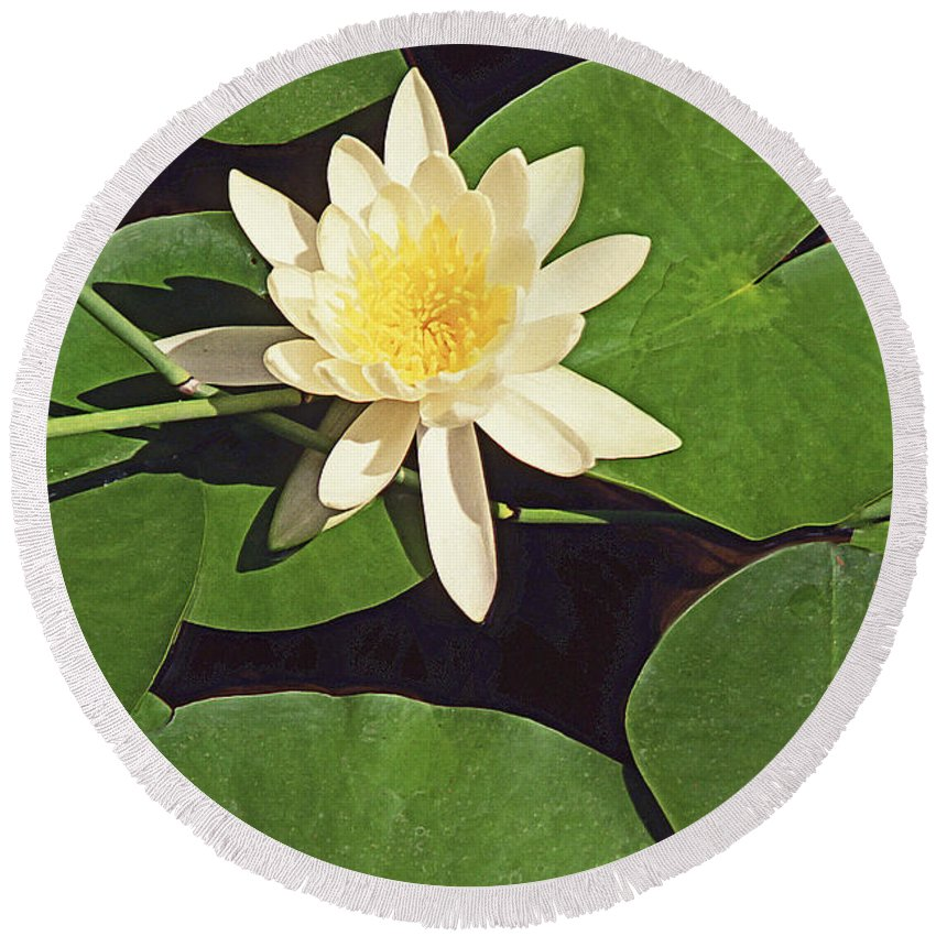 Water Lilies Round Beach Towel featuring the photograph Water Lily I V by Jim Smith
