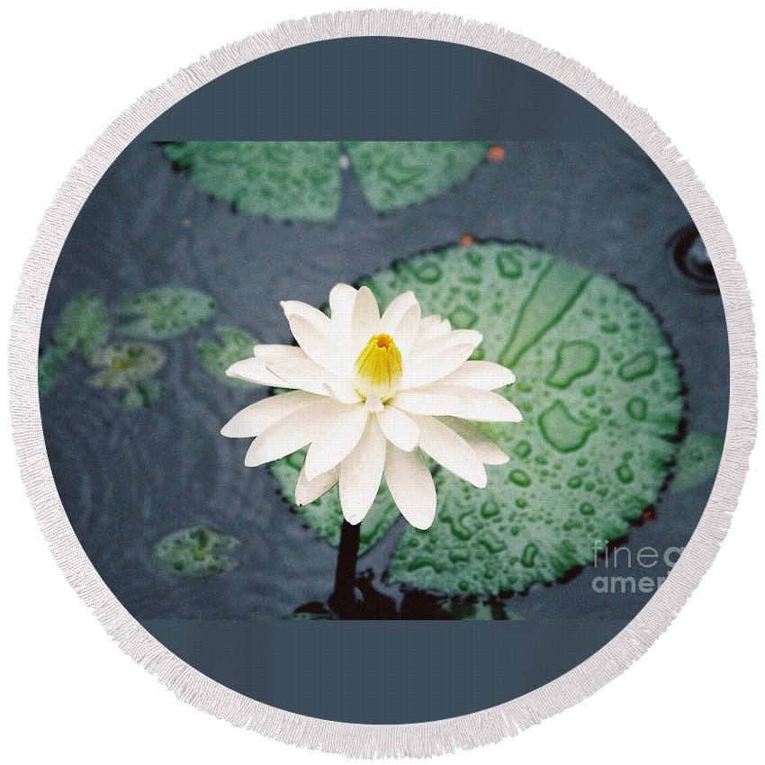 Flowers Round Beach Towel featuring the photograph Water Lily by Kathy McClure