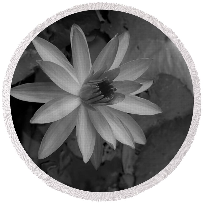 Water Round Beach Towel featuring the photograph Water Lily Monochrome by Brendan Mooney