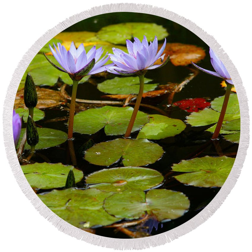 Pond Round Beach Towel featuring the photograph Waterlilies by Gaspar Avila