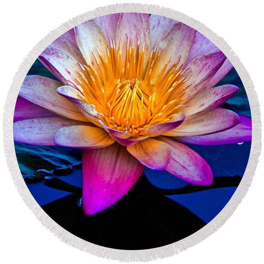 Waterlilly Round Beach Towel featuring the photograph Waterlilly by Chris Lord