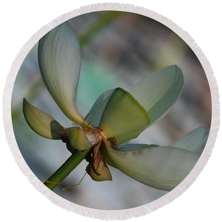 Botanical Round Beach Towel featuring the photograph Waterlily Wash Peekaboo by Heather Kirk