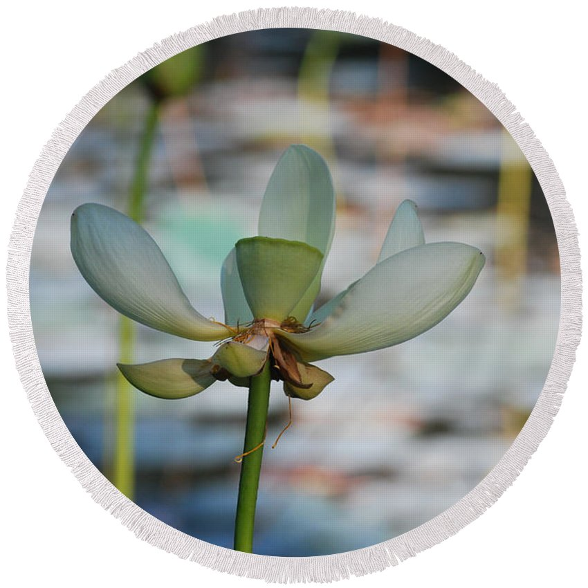 Botanical Round Beach Towel featuring the photograph Waterlily Wash Vertical by Heather Kirk