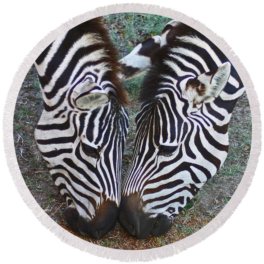 Zebra Round Beach Towel featuring the photograph We Can Share by Rebecca Morgan